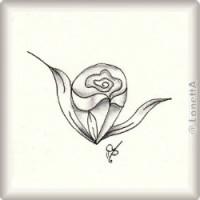 teardrop rose